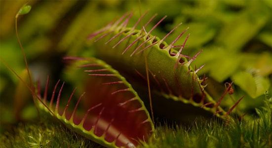articulo plantas carnivoras