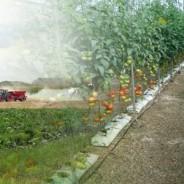 Robos en campos agricolas y explotaciones en España