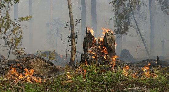 incendios forestales y consejos evitarlos