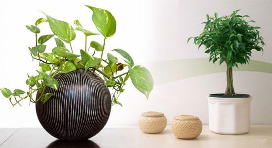Plantas purificadoras sotos agricola Plantas limpiadoras de aire